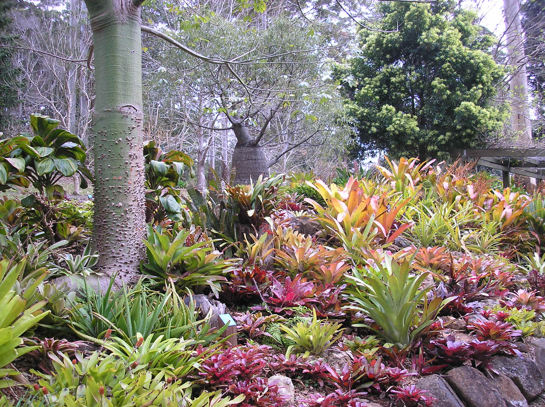 Bromeliad garden tamborine mountain botanic gardens for New garden plants