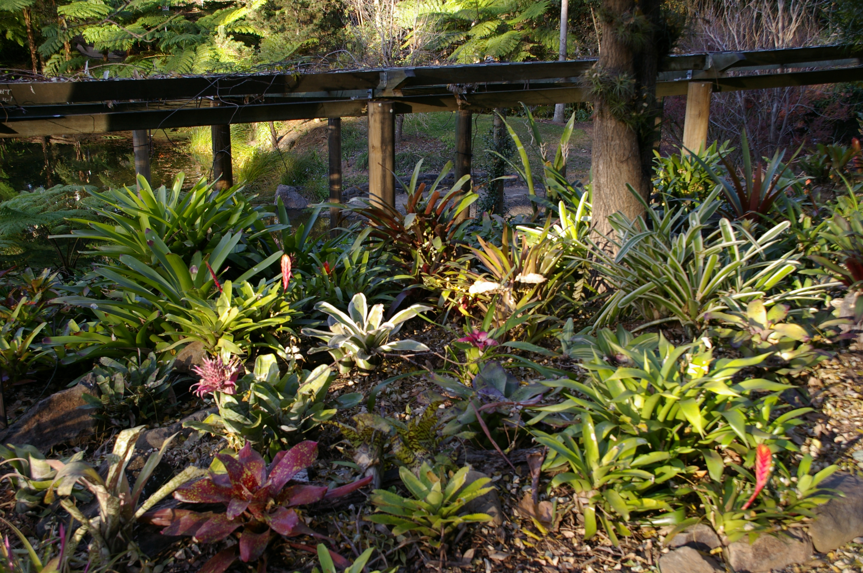 ... Japanese Garden Plant List ...