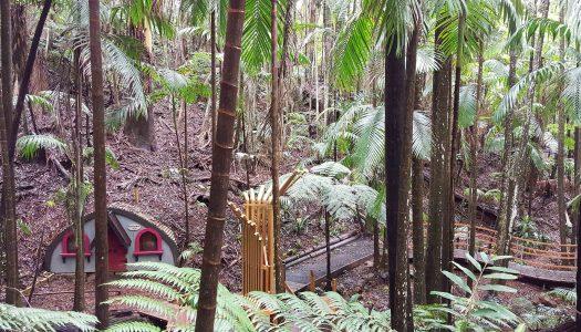 Sooty Owl Creekside Trail