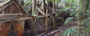 Sooty Owl trail (7)