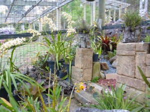 Orchid House (2)