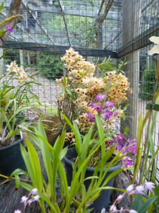 Orchid House (6)