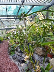 Orchid House (8)