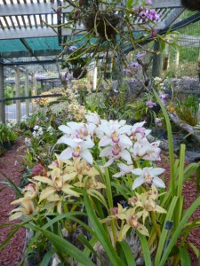 Orchid House (4)