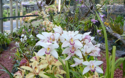 Orchid House in Bloom
