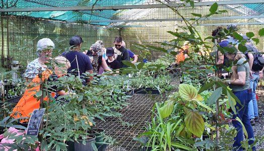 Volunteers applaud Botanic Gardens plant sale success